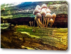 Постер грибы