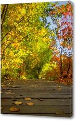 Картина Деревянная дорожка, в осеннем парке