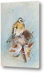 Певчая птица и Крапивники