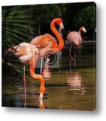 Постер Фламинго на воде