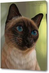 Постер Кошка с голубыми глазами