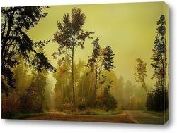 Лес летом