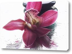 Постер Цветок орхидеи на мокром стекле