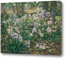 Весенний луг с ромашками, васильками и маками