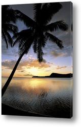 Прекрасная пальма на фоне заката