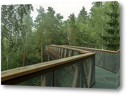 Постер Прогулка в лесу над верхушками деревьев