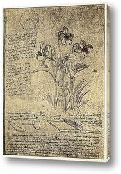 Постер Leonardo da Vinci-22