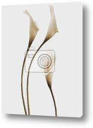 Постер 3d callas