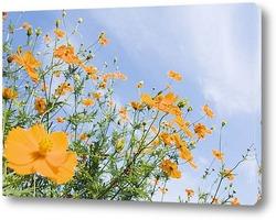 Flower381