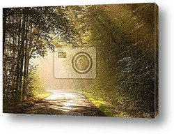 Постер Country road through autumn forest at sunrise