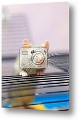 Постер Petit rat qui sort de sa cage