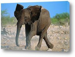 elephant004