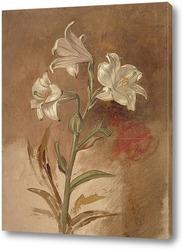 Картина Белые лилии