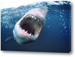 Постер Shark008