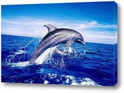 Постер Dolphin113