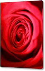 Четыре  розы