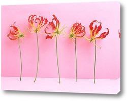 Flower456