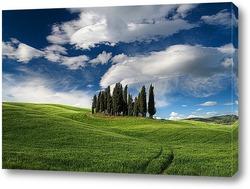 Картина Кипарисы в Тоскане