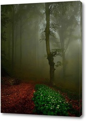 Постер На лесной тропе