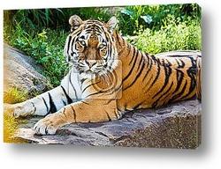Белый и коричневый тигры
