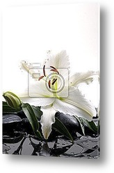 Madonna lilies with spa stone with reflection