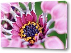 Flower611
