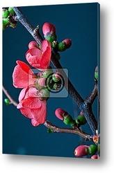 Цветущий куст вишни