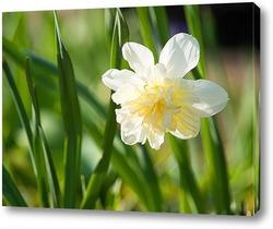 Постер Нарцисс