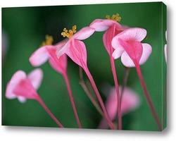 Flower256