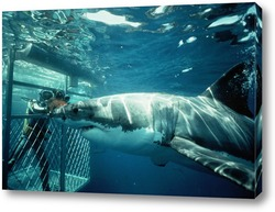 Постер Shark041