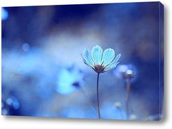 Постер Голубые сны