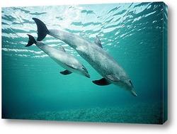 dolphin077
