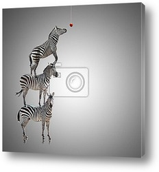Постер Stack Of Zebra Reaching To Eat Apple