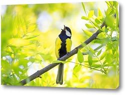 Постер синица поет среди молодой зелени дерева в начале весны