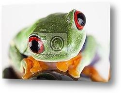 Постер Tree frog