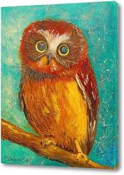 Постер Маленькая сова