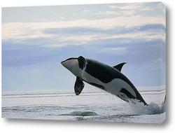 dolphin067