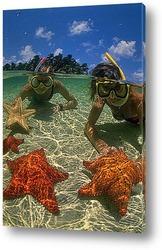 Постер Starfish030