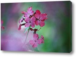 Flower074