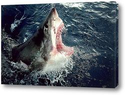 Постер Shark006