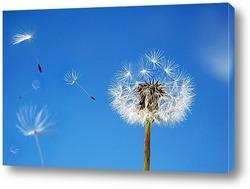 Постер Облетели твои семена