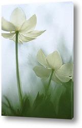 Flower476