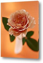 Flower592