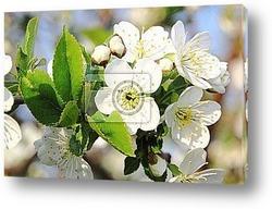 Весенне цветение