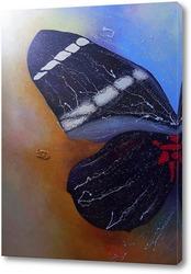 Постер Крыло бабочки