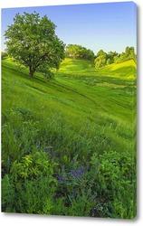 Постер Среди зеленых трав