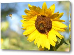Картина Подсолнух с пчёлкой и шмеликом