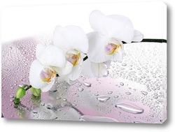 """Картина """"Нежный цветок на влажной поверхности""""."""