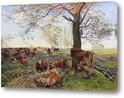 Крупный рогатый скот на острове Сальтхольм, 1890