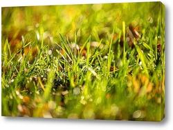 Постер трава
